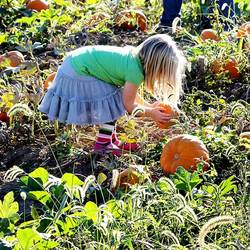 girl picking pumpkin to paint